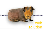 websolution - megahigh.com web solutions web design